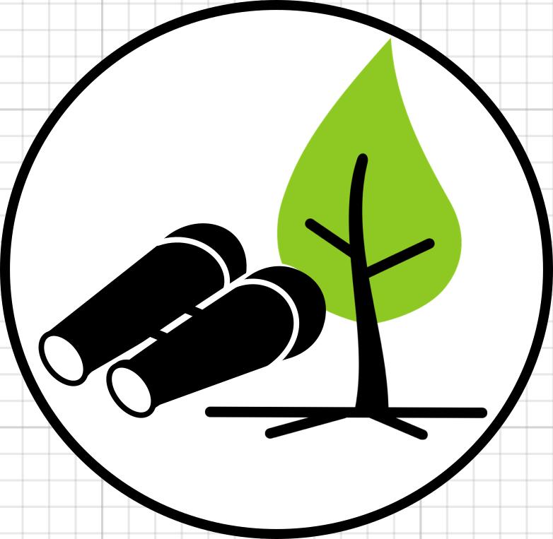 eingehende Baumuntersuchung