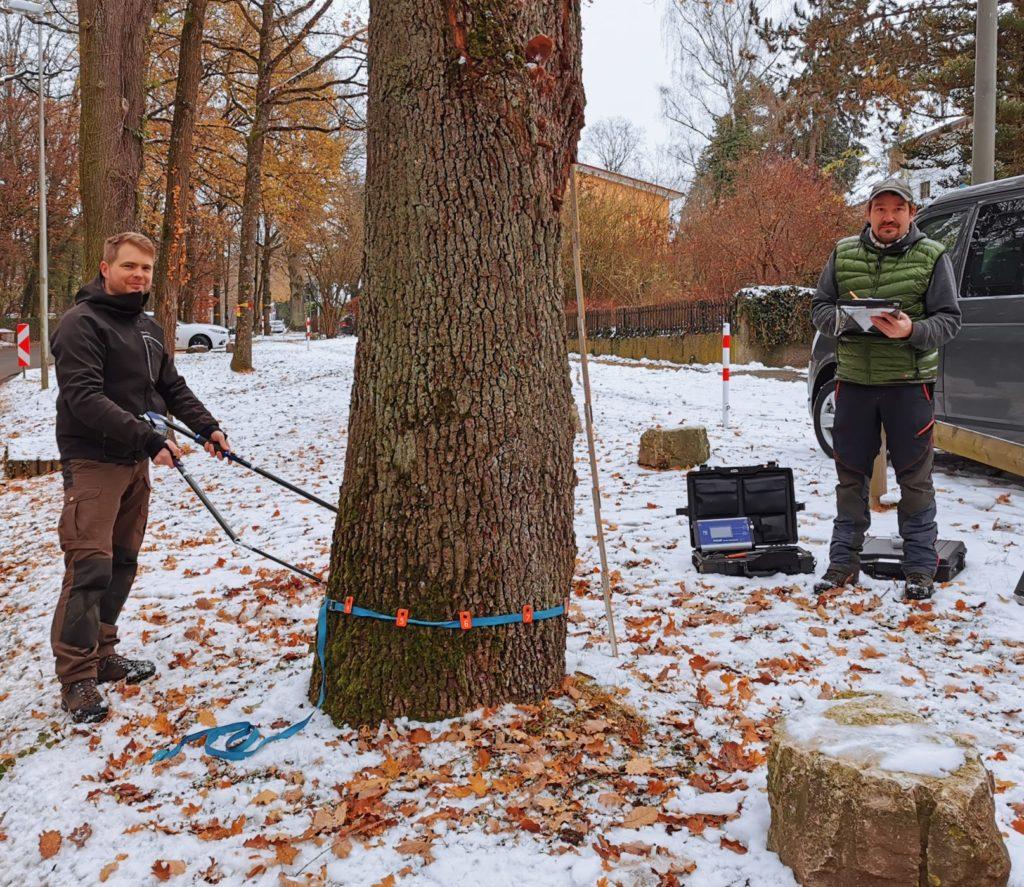 Baumuntersuchungen in Bayern