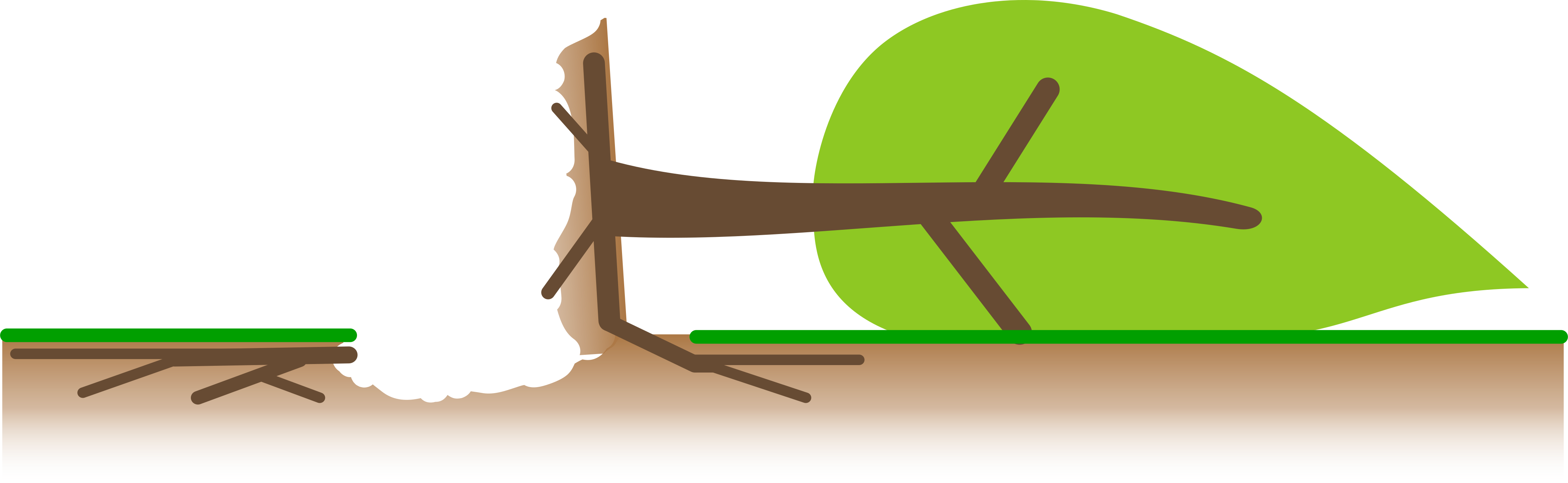 Grafik Standsicherheit / Bruchsicherheit Baumversagen Baumkippen